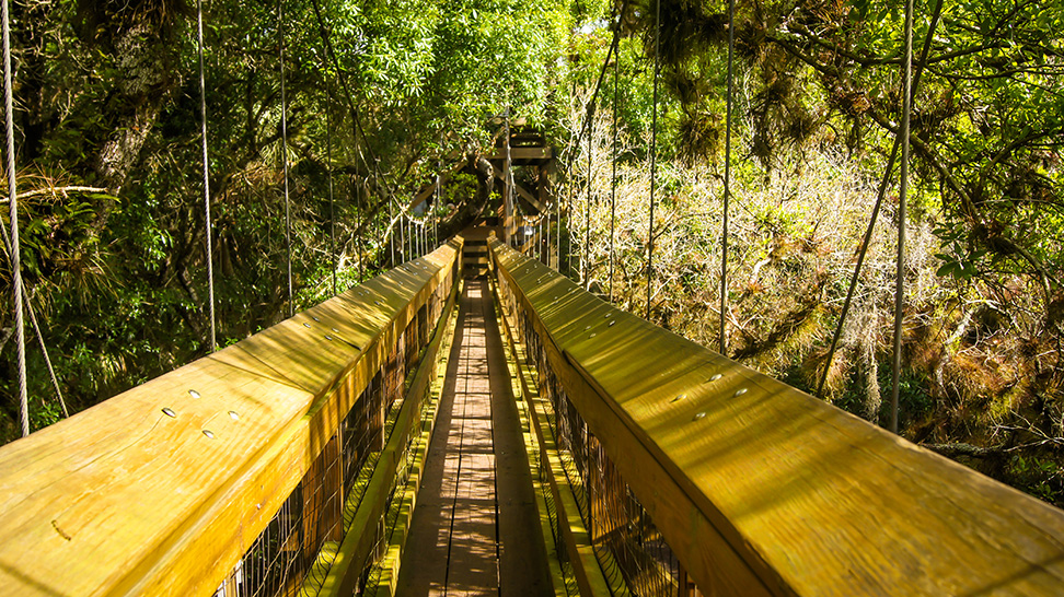 canopy walkway at myakka river state park
