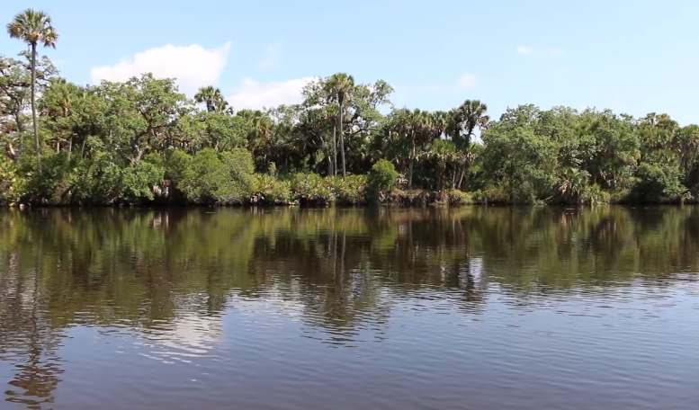 myakka river in sarasota county florida