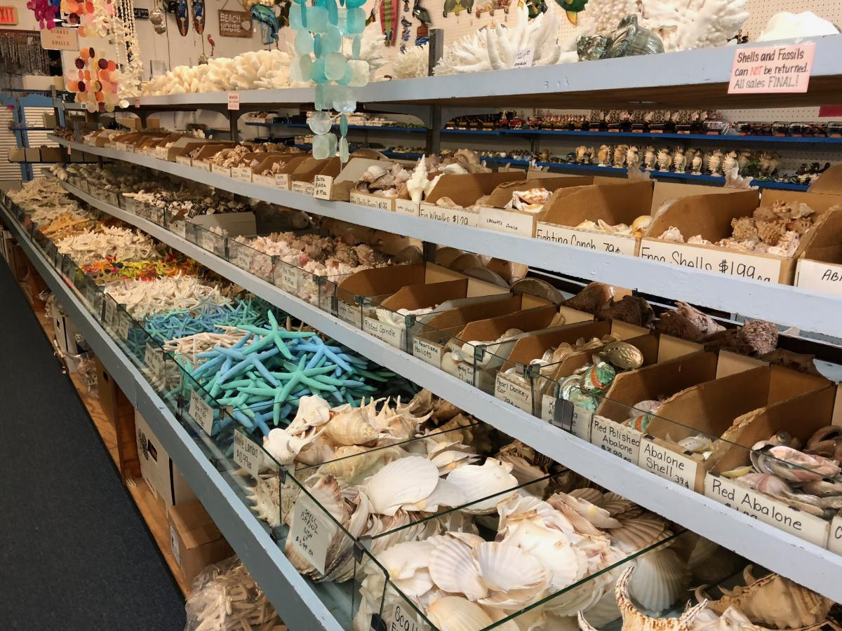 shells in a souvenir store