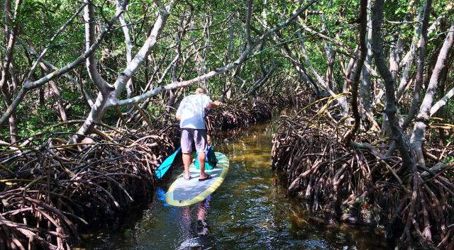 SUP in the Mangrove Tunnels. Photo credit: Liz Sandburg.