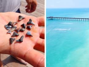 Shark teeth and Venice Beach, FL by Sean Daly , Zack Perry