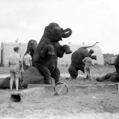 animal trainers and elephants
