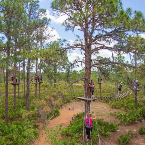 BOGO Buy one and get double the FUN at TreeUmph! Adventure Course
