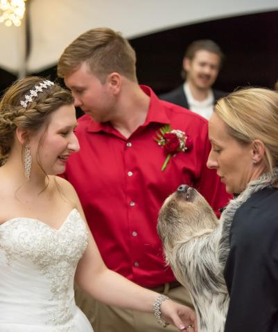 Sloth Wedding