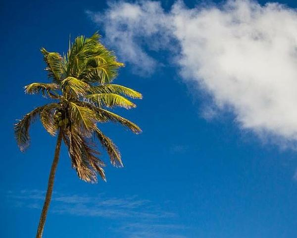 Bungalow Beach Resort Palm Trees - Enjoy the soaring Palm Trees found on the property of Bungalow Beach Resort.