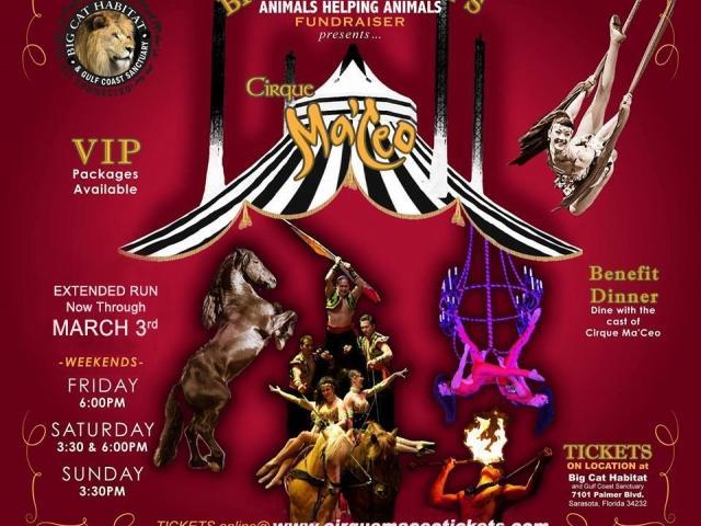 Cirque Ma'Ceo Equestrian Show at Big Cat Habitat