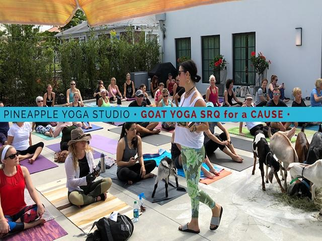 GOAT YOGA for a CAUSE at Pineapple Yoga Studio