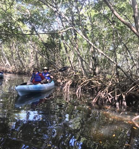Mangrove Tunnel fun