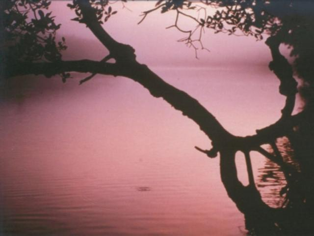 Lemon Bay Park and Environmental Center | Visit Sarasota
