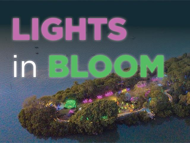 Lights in Bloom