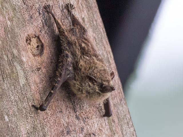 "Presentation: ""The Secret LIfe of Bats"""