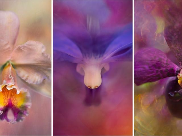 Opening Reception - Floral Ecstasy by Jackie Kramer