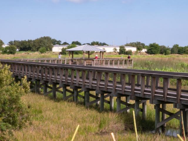 The boardwalk at Raymond Road; South Cell, Celery Fields - Two elevated boardwalks extend over the wetlands at Raymond Road and Palmer Boulevard, providing excellent bird and wildlife viewing.