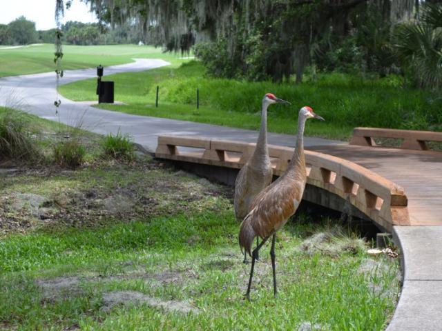 Sandhill Cranes - Wildlife on the course