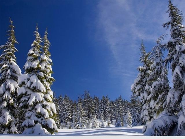 Winter Wonderland Family Event