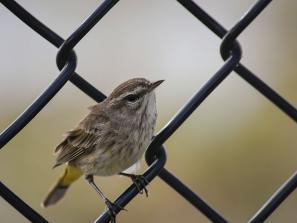 Birdwatching at Celery Fields in Sarasota County.  Photo by Eddie Kirsch
