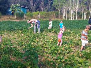 Gleaning - Jessica's Farm
