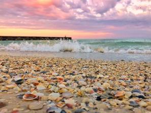 shells on beach in sarasota county
