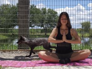 Fox Yoga