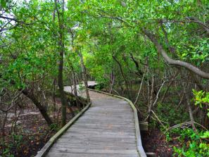 Ken Thompson Park - This boardwalk has been sensitively designed to protect the environment while allowing public access and enjoyment of the mangrove canopy experience. As such, the visitor will encounter low branches and narrow corridors in some areas along the walkway.