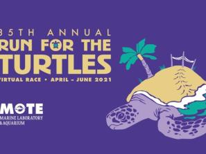 Run for the Turtles