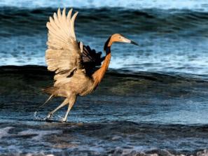 Sarasota Audubon Society MEMBER FINE ART & PHOTOGRAPHY SHOW