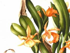 The Art of Orchid Features - Orchid Show Workshop