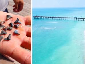 Shark teeth and Venice Beach, FL by Sean Daly , Zack Perry