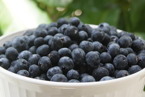 Florida Fresh Blueberry U-Pick