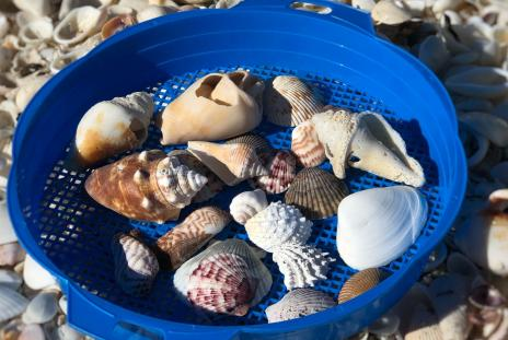 shells in a basket on a beach