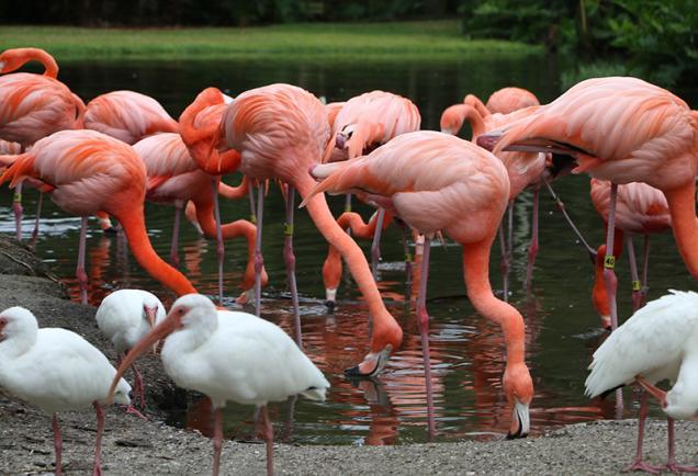 Sarasota Jungle Gardens - Photo Credit: Robin Draper