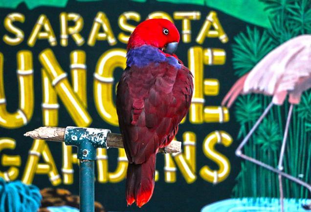 Sarasota Jungle Gardens - Parrot with bright red plummage - Photo Credit: Eddie Kirsch