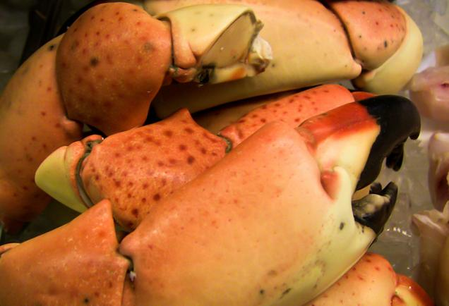 Stone crab claws. Photo credit: Robin Draper