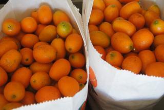 Bags of kumquats. Photo by Robin Draper.