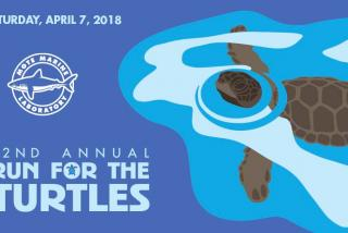 32nd Annual Run for the Turtles