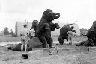 animal trainers and elephants