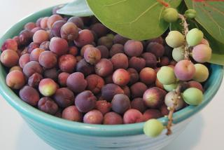 Bowl of Sea Grapes. Photo credit: Robin Draper.