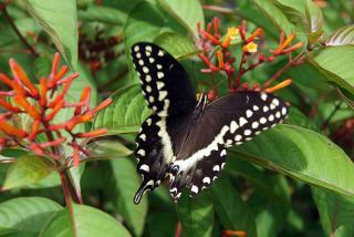 Butterfly Garden. Photo credit: Robin Draper