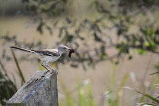 Bird-Watching 101: A Feathery Field Guide to Sarasota County