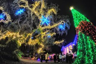 botanical garden decorated with christmas lights