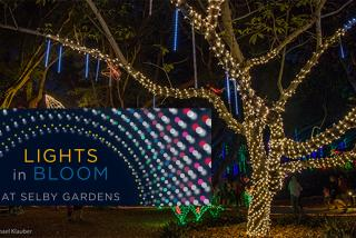Lights In Bloom - Selby Gardens - Signature Event