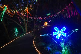 Selby's Annual Lights in Bloom event (Selby Gardens)
