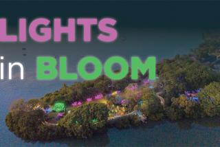 Lights in Bloom