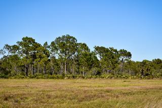 Myakka Forest