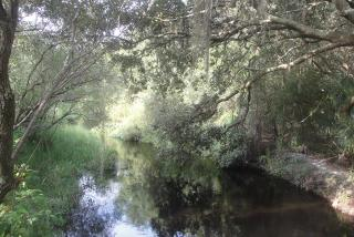 Natural settings in North Port - Green Foliage