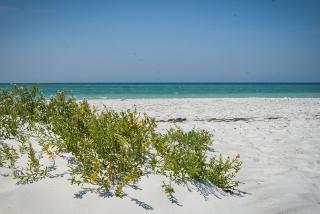 Lido Beach South. Photo Credit: Robin Draper.