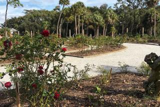 Mable Ringling's famous rose garden.