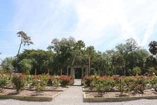 The Ringling Rose Garden.  Photo by Eddie Kirsch.