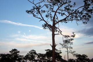 Myakka River State Park. Photo credit: Liz Sandburg