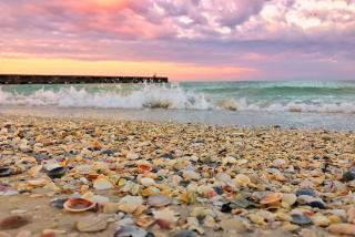 shells on beach in sarasota county